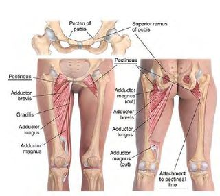 Hip Flexor and its Connections