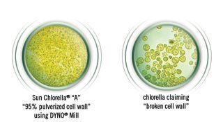 Chlorella-Cell-Wall-Breakdown