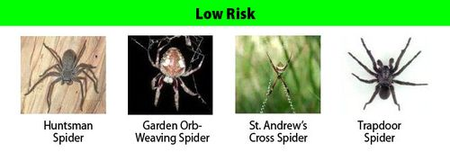 Spiders_LowRisk