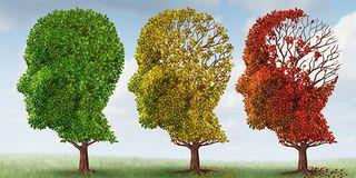 Brain-trees-w