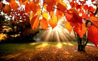 Fall-leaves-wallpapers-for-desktop