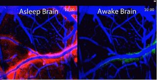 Brain Working While Sleeping