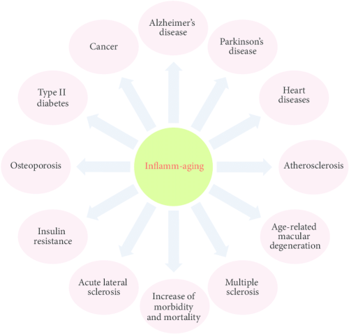 The-relationship-between-inflamm-aging-and-diseases