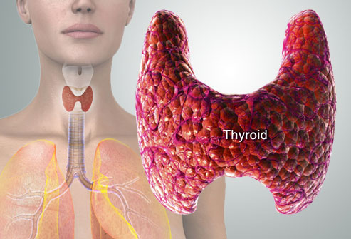 Webmd_rm_photo_of_thyroid_diagram